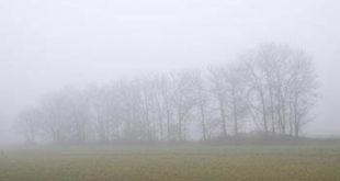 nebbiaalberi